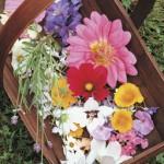 mb gedroogde bloem 2
